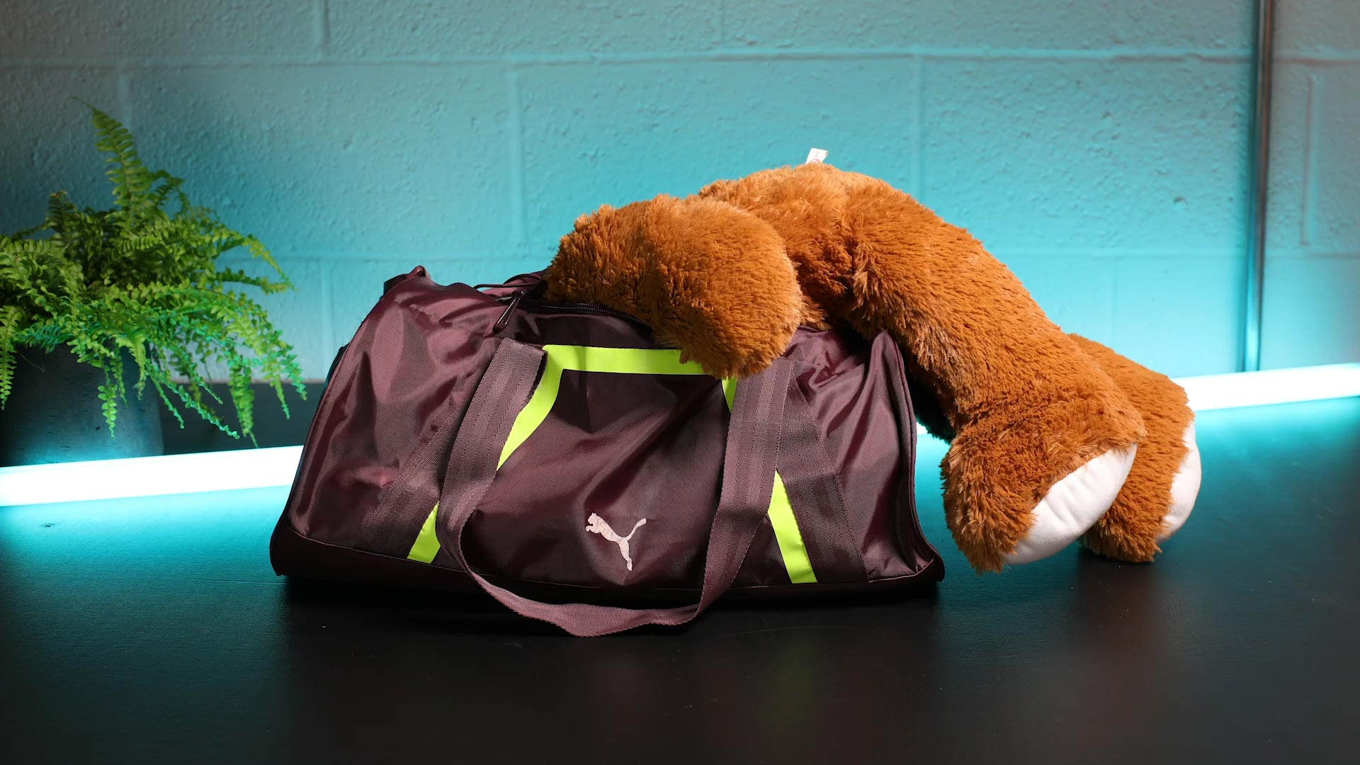 Teddy dives into Puma sports bag stop motion